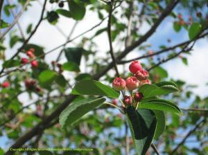 Blossom on tree