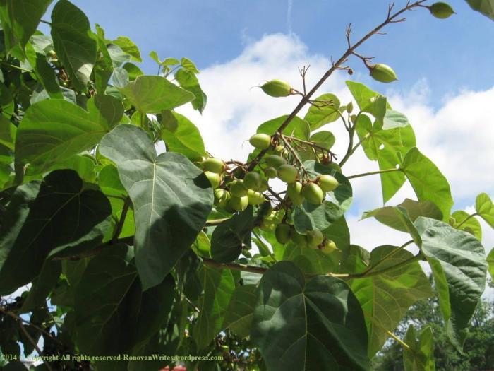 UGA Tree