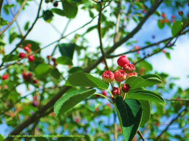 Blossom - Copy