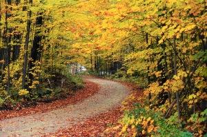 autumn_;eaves_road.jpg