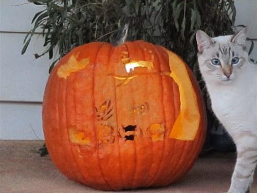 spunky_pumpkin3