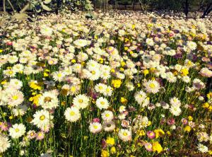 A sea of spring flowers welcomes the bees