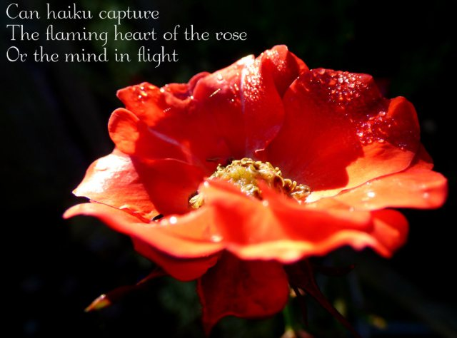 Can haiku capture The flaming heart of the rose Or the mind in flight