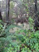 Fairy Swamp
