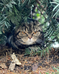 Sir Wallace the Cat Instagram